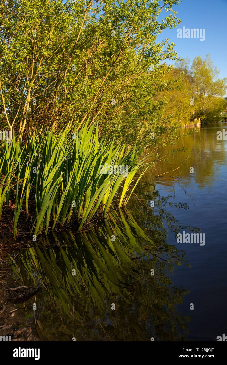 Lake and trees at Buckley Common, Flintshire, North Wales Stock Photo