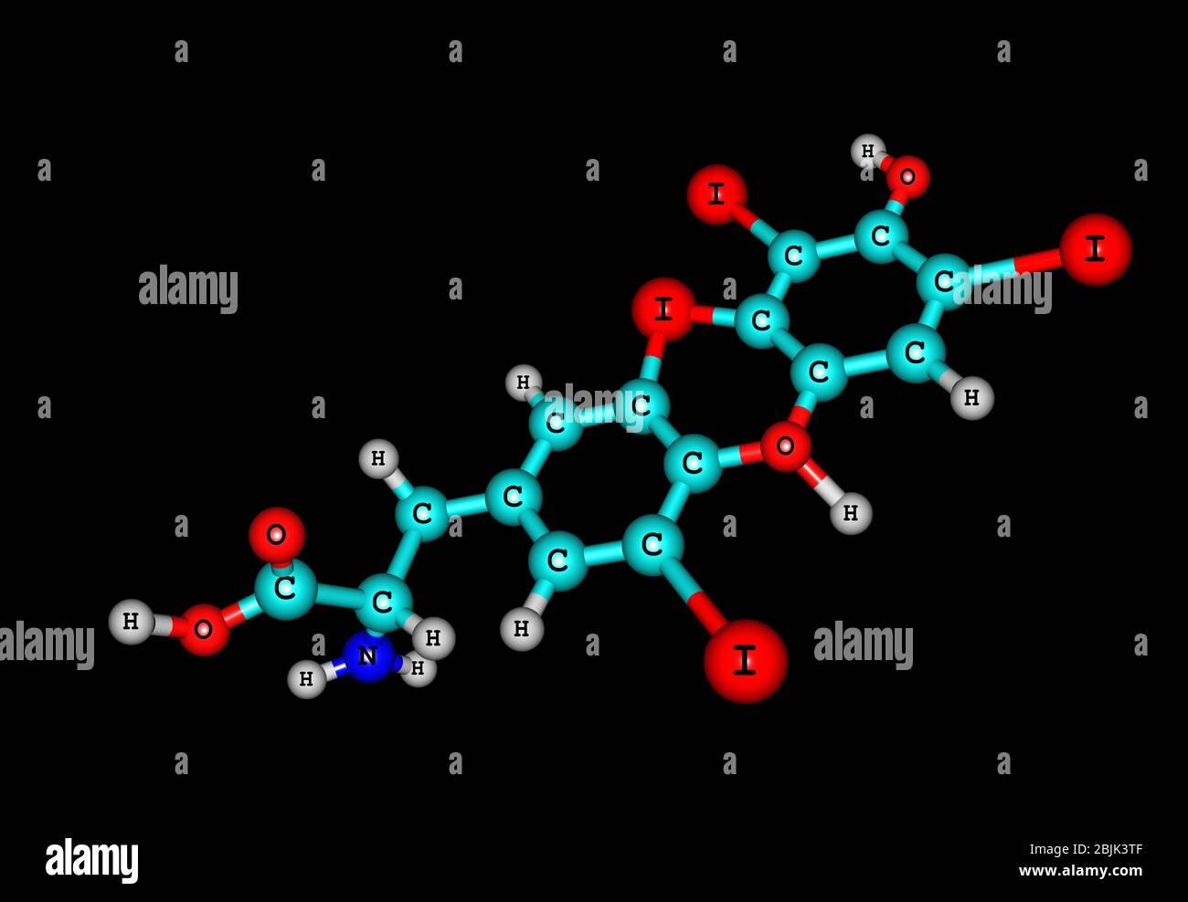The Thyroid Hormones T3 And Thyroxine T4 Are Tyrosine Based
