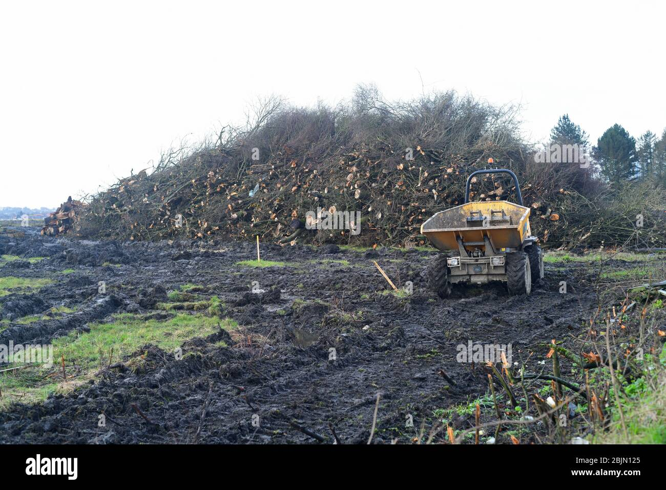 giant pile of tree trucks of trees removed due to new road construction leeds yorkshire united kingdom Stock Photo