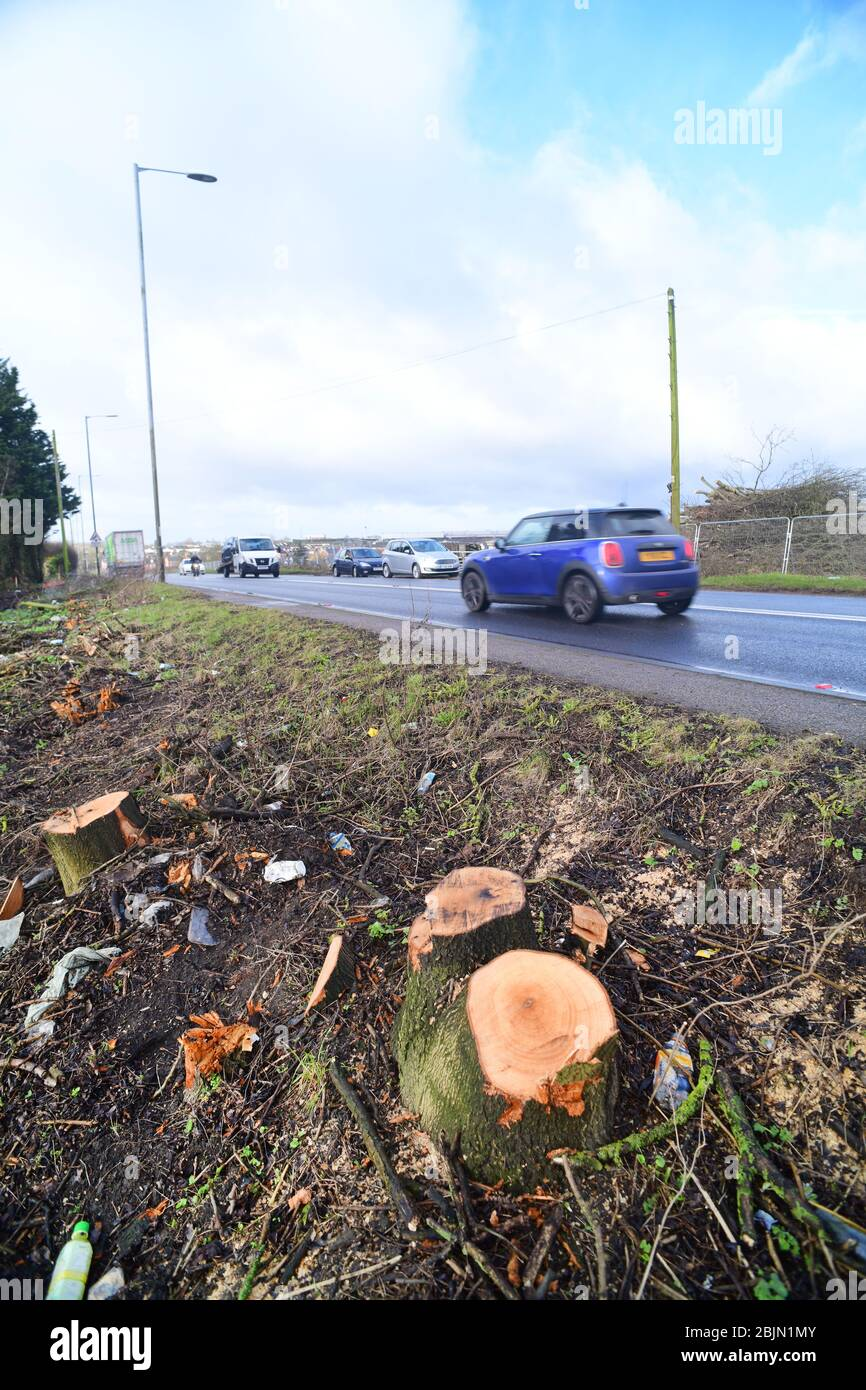 car passing remains of tree trucks of trees removed due to new road construction leeds yorkshire united kingdom Stock Photo