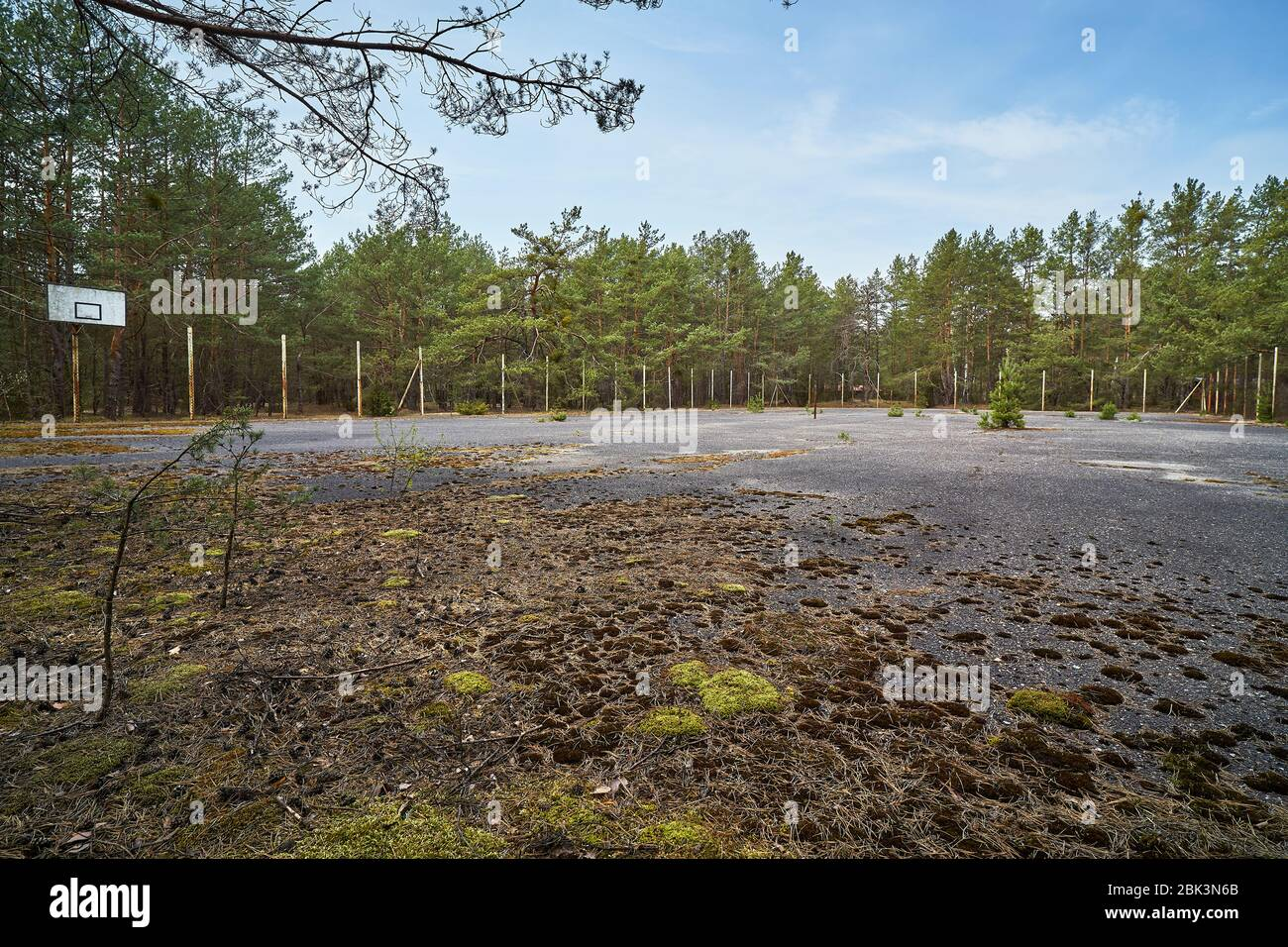 Old Abandoned Asphalt Playground In The Spring Forest Stock Photo Alamy