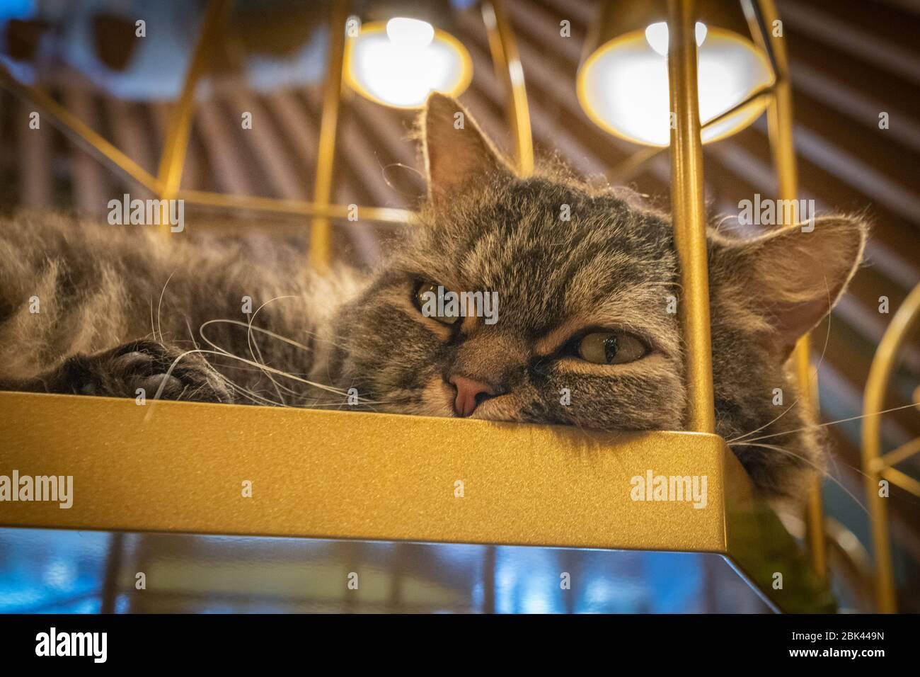 Inside A Cat Cafe Tokyo Japan Stock Photo Alamy