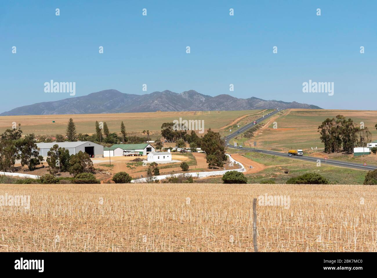 Caledon, Western Cape, South Africa. 2019 .Wheat and sheep farming along the N2 highway and Garden Route close to Calendon, Stock Photo