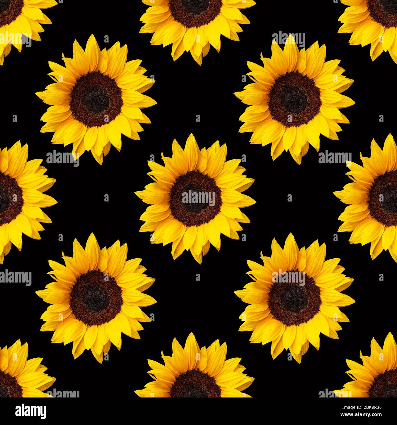 sunflowers flowers seamless pattern design on black background can be tiled 2BK8R36