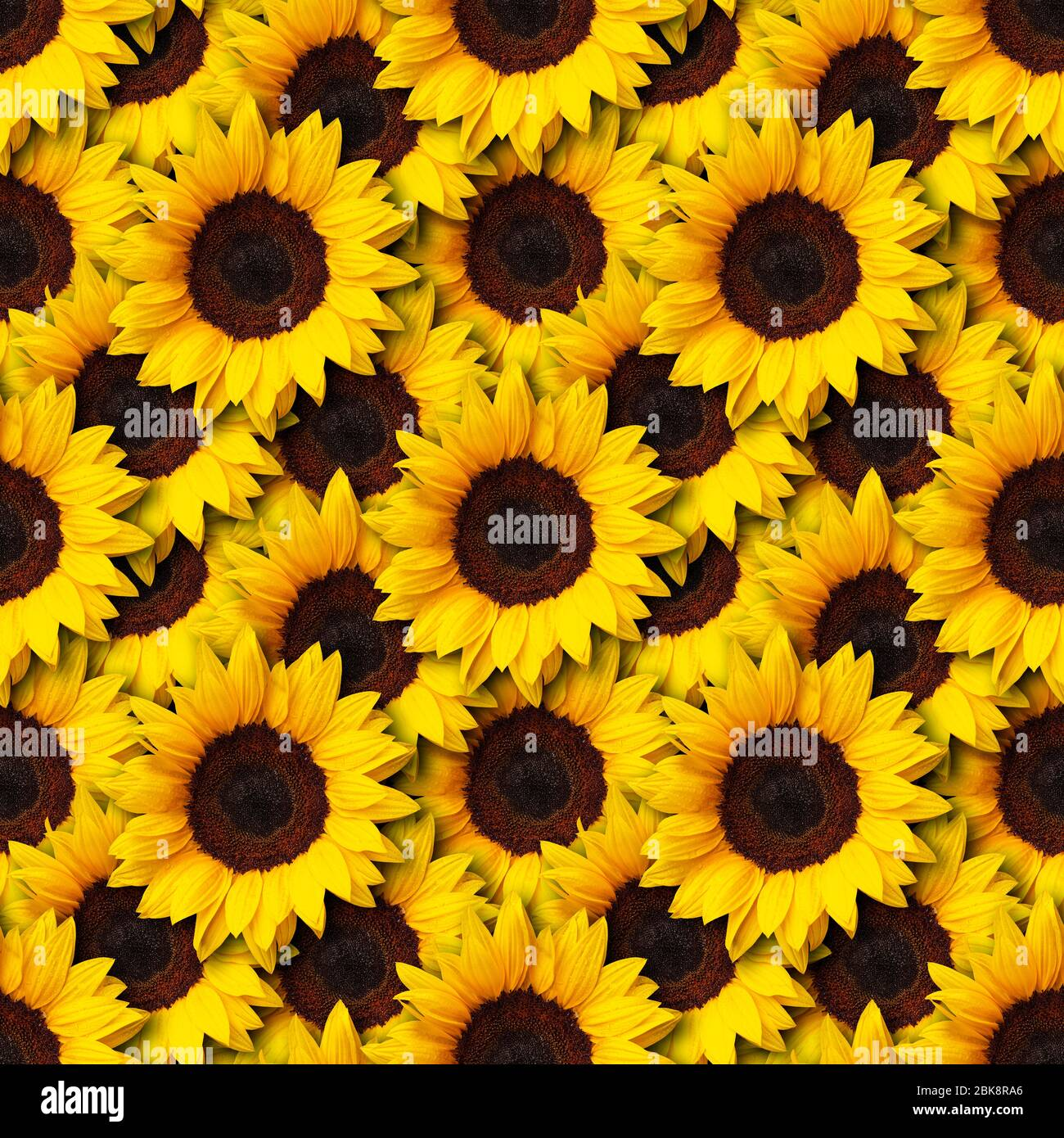 sunflowers flowers seamless pattern design background can be tiled 2BK8RA6
