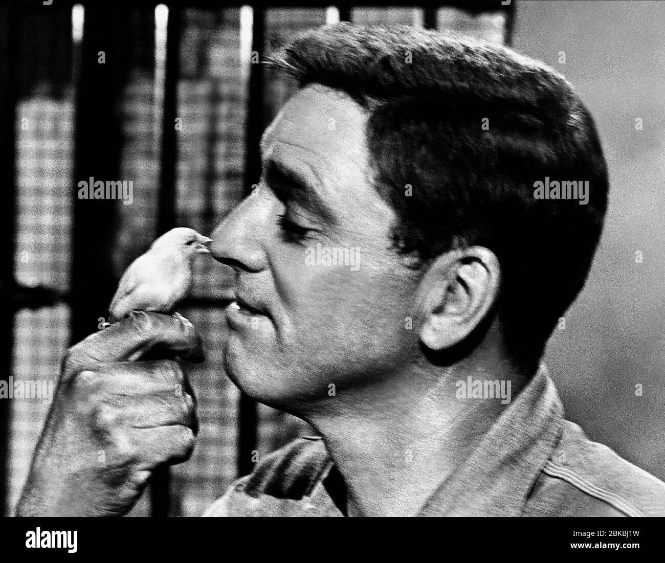 BURT LANCASTER, BIRD, THE BIRDMAN OF ALCATRAZ, 1962 Stock Photo