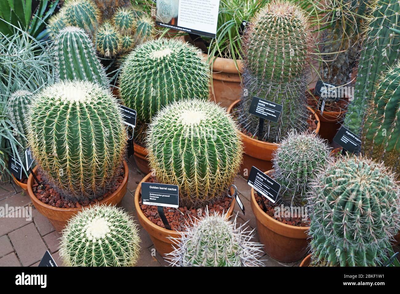 Arrangement Of Cactus Plant In Clay Pots Stock Photo Alamy