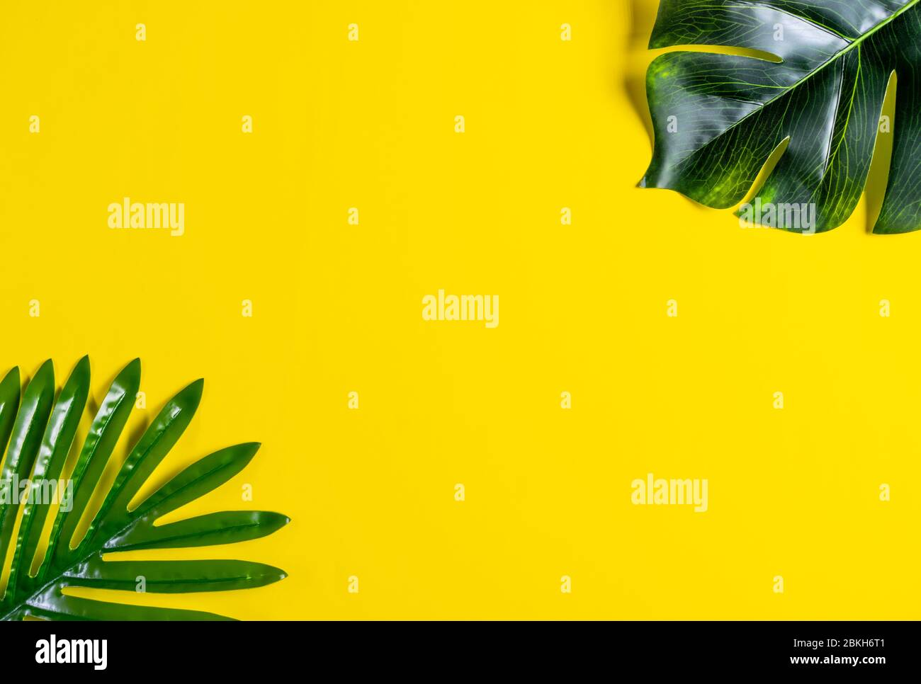Summer Composition Tropical Monstera Leaf And Palm Leaves On Yellow Background Summer Concept Top View Copy Space Stock Photo Alamy Gradient abstract quirky botanical illustration set. alamy