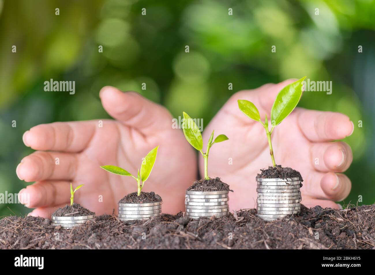Hand putting coin on coin stack growing graph with green bokeh background. Business growth or saving, retirement concept. Stock Photo