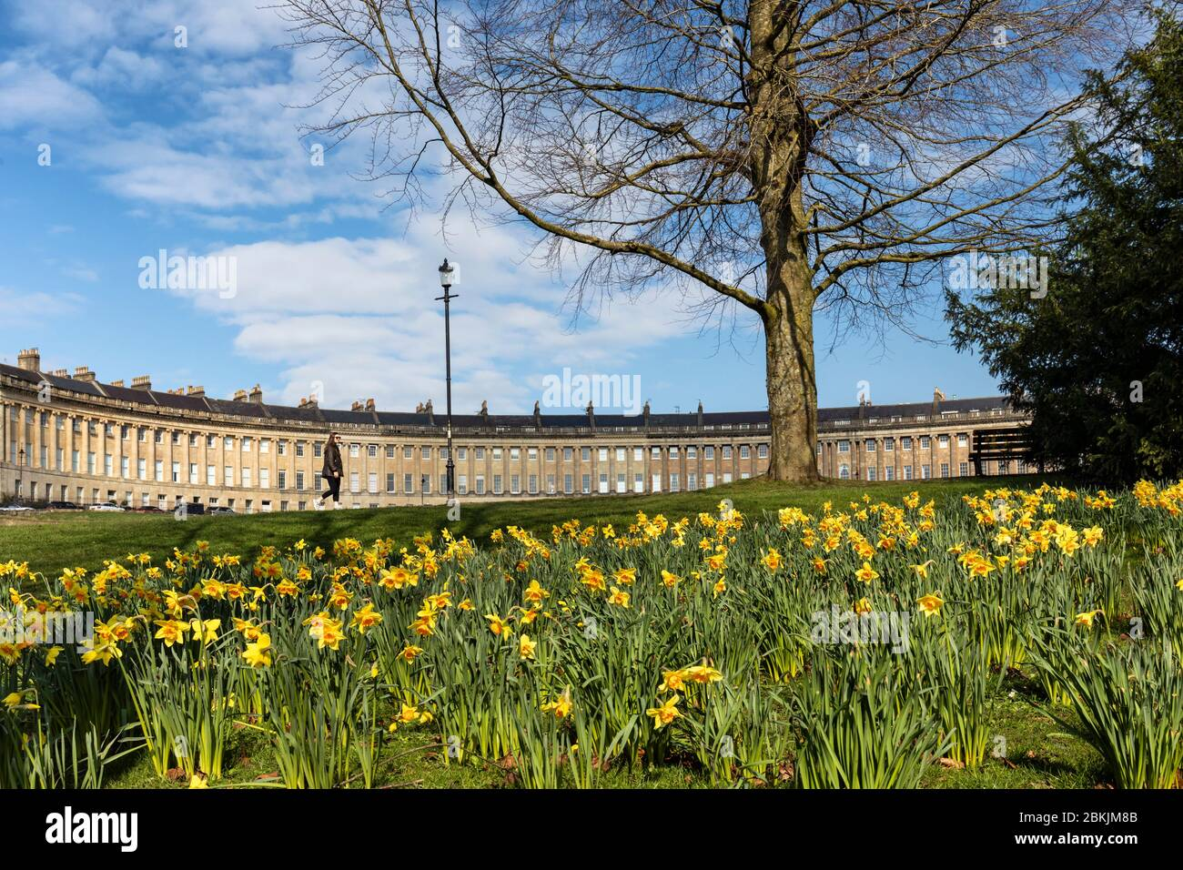 Spring Daffodils in Royal Victoria Park, Bath, with the Royal Crescent in the background, England, UK Stock Photo