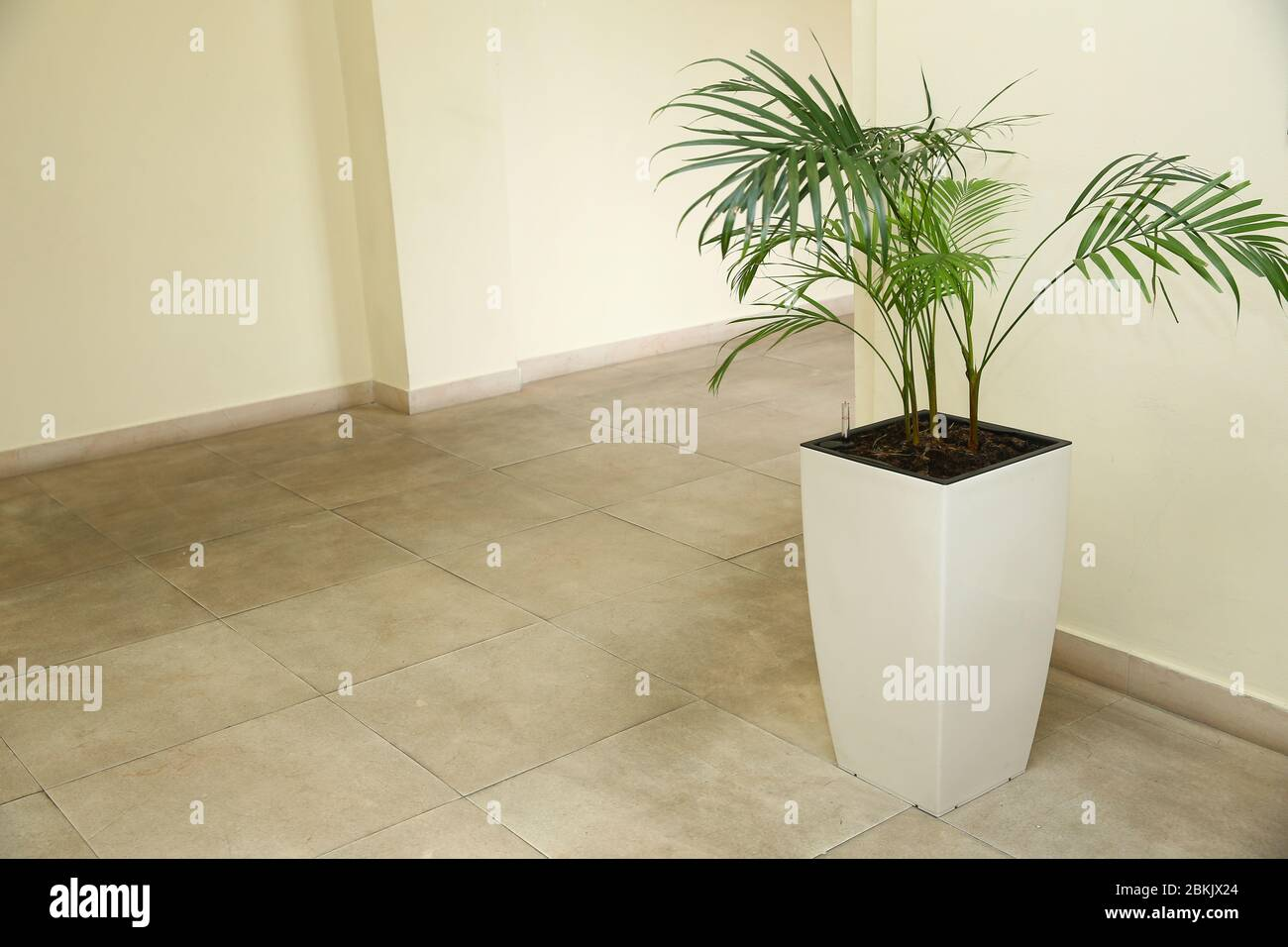 Vases In A Row Green Plant Pot Houseplant Areca Palm Indoor Flower Pots Plants Large Stock Photo Alamy