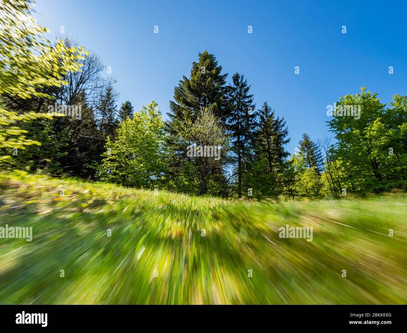 Green forest nature speeding like flying Spring season Lokve in Croatia Europe Stock Photo