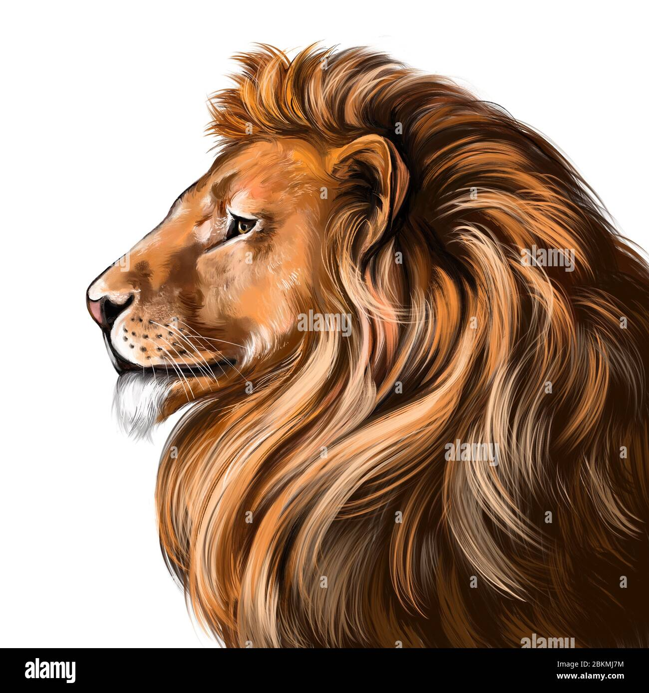 Animal Lion King Of Beasts Art Illustration Painted With Watercolors Isolated On White Background Stock Photo Alamy Cute drowing of lion head outline. https www alamy com animal lion king of beasts art illustration painted with watercolors isolated on white background image356339192 html