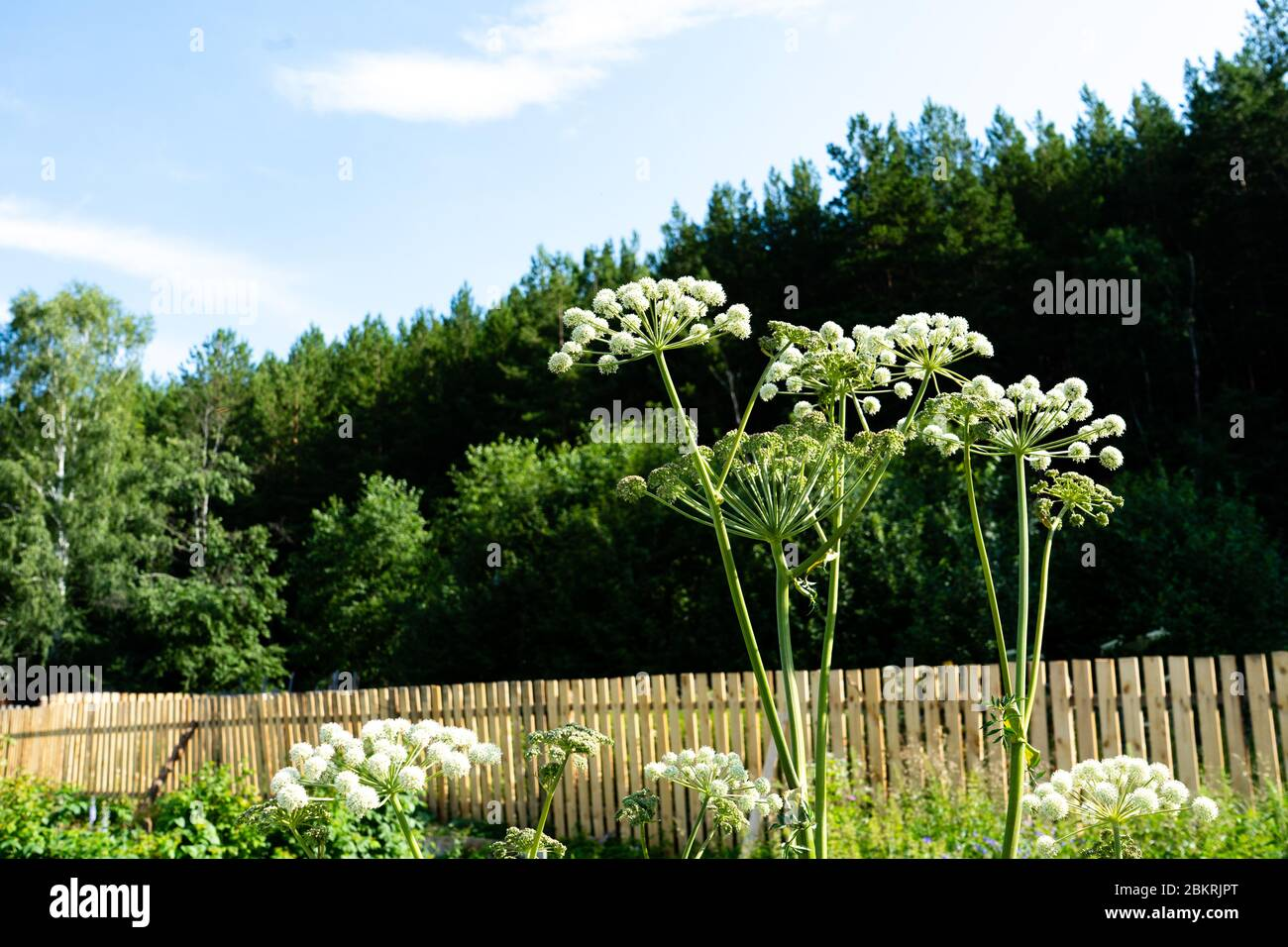 Norwegian Garden High Resolution Stock Photography And Images Alamy