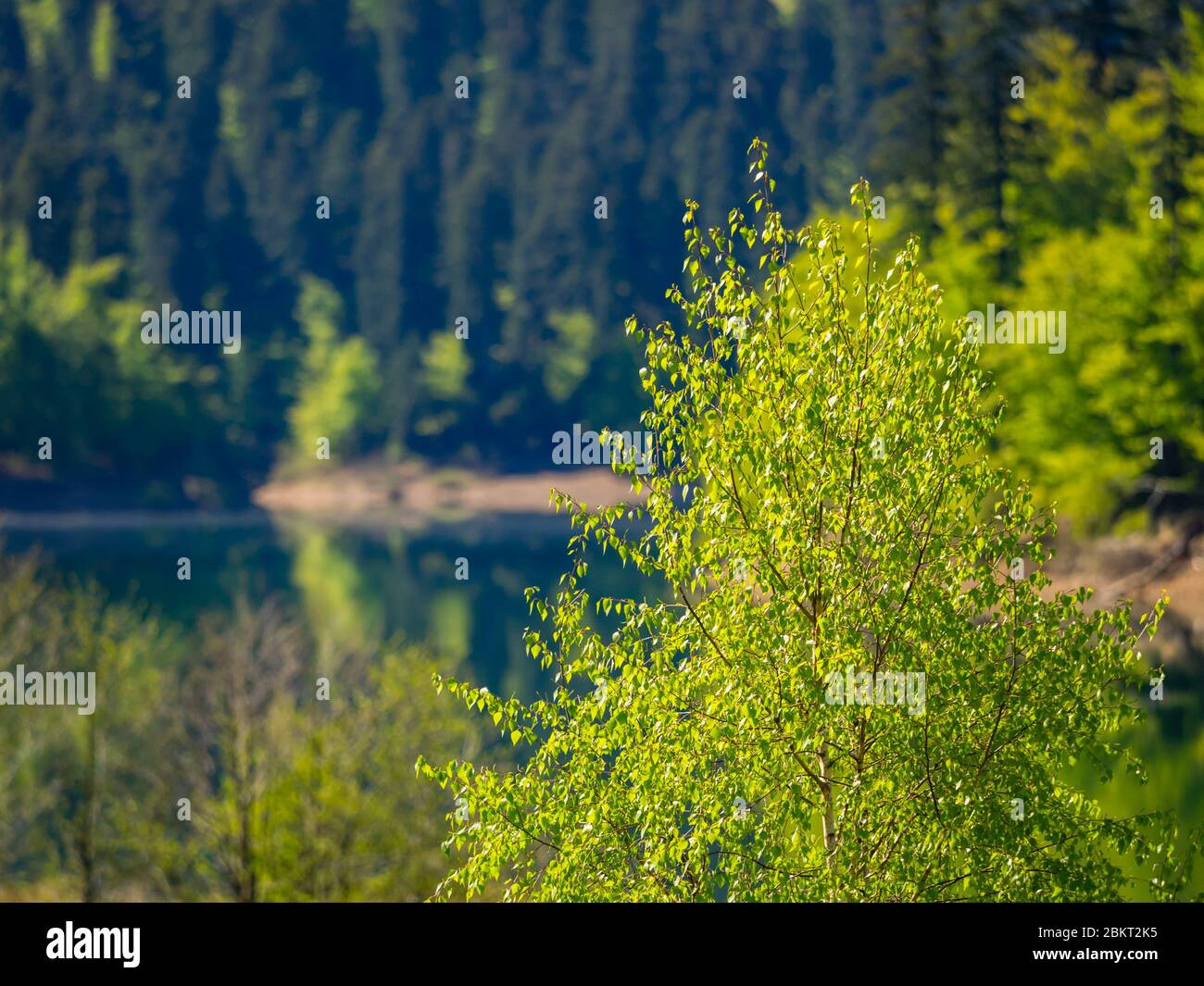 Spring season in Green forest Lokve lake Croatia Europe Stock Photo