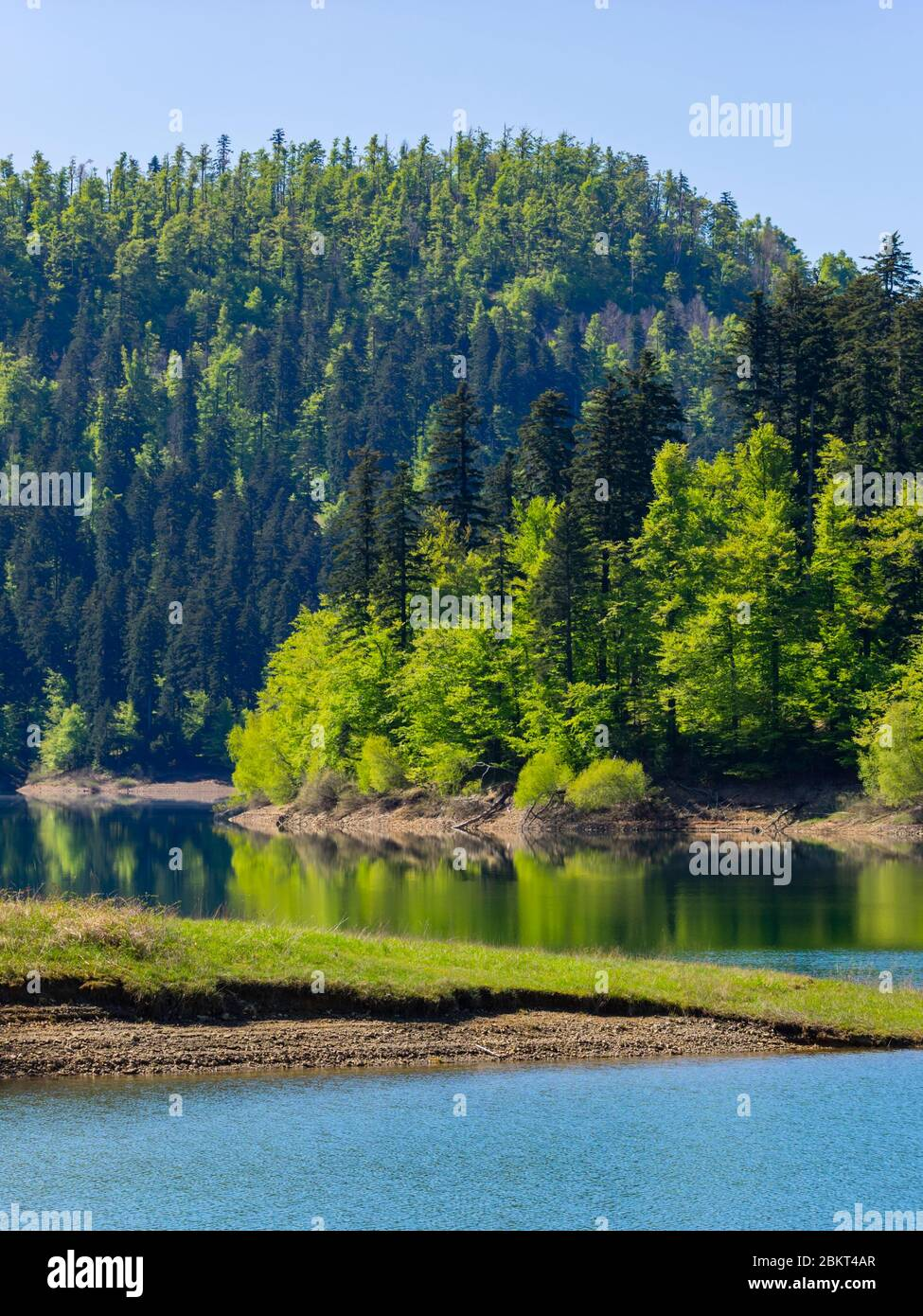 Spring season in Green forest woodland Lokve lake Croatia Europe Stock Photo