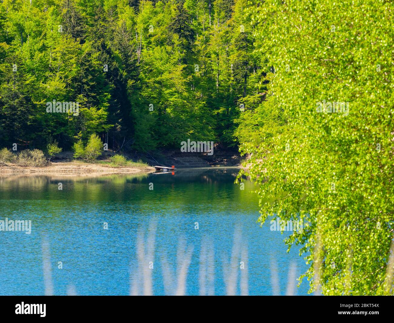 Spring season in Green forest woodland Lokve lake Croatia Europe Stock Photo