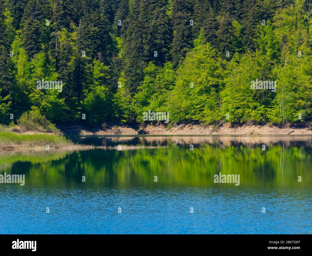 Spring season in Green forest Lokve lake Croatia Europe Stock Photo