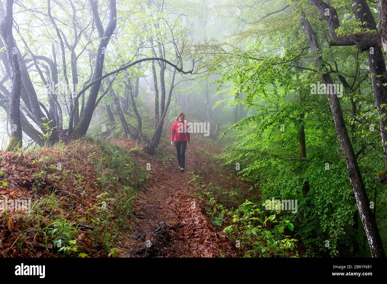 Woman in red jacket walking trough mysterious forest with fog Stock Photo