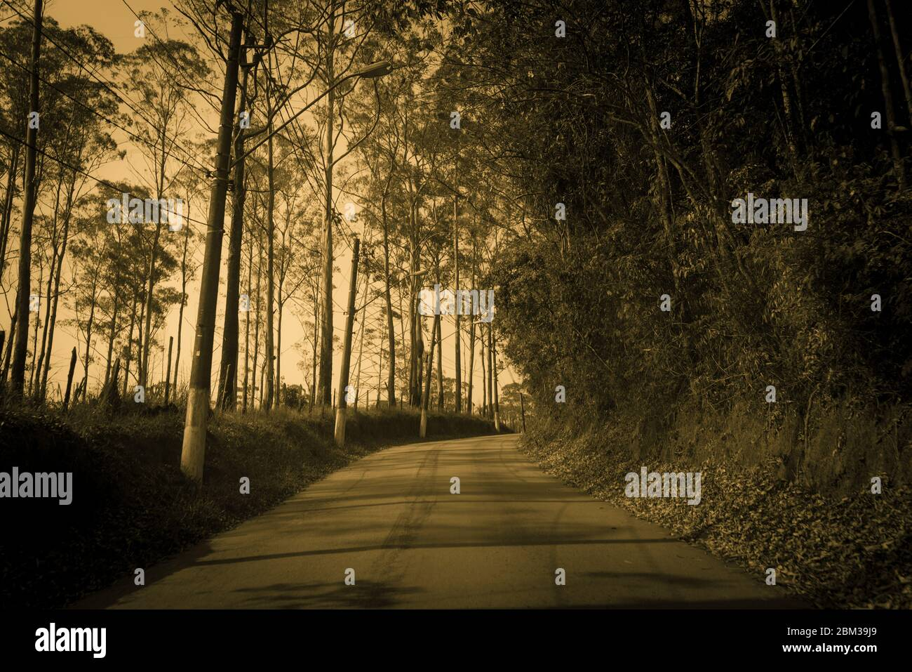 View Of Empty Road With Trees In Background High Resolution Stock Photography And Images Alamy
