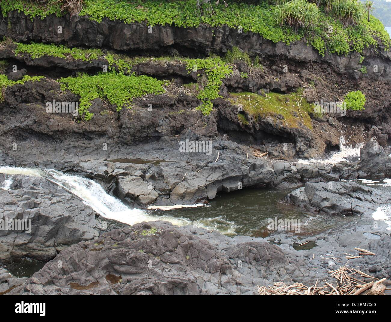 Palikea stream running through volcanic rock with Scaevola taccada and tropical trees growing on the rock at the Oheo Gulch in Hana, Maui, Hawaii, USA Stock Photo