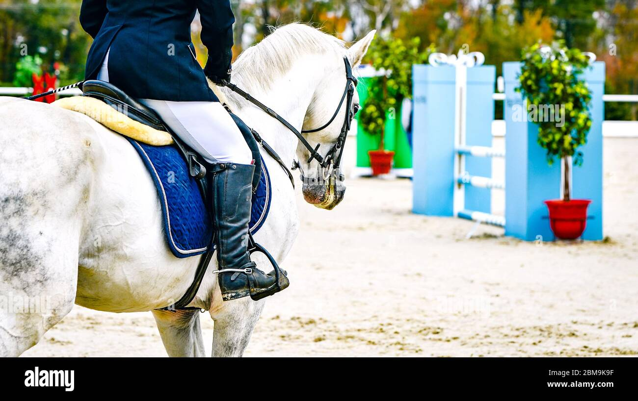 Horse And Rider In Uniform Beautiful White Horse Portrait During Equestrian Sport Show Jumping Competition Copy Space Stock Photo Alamy