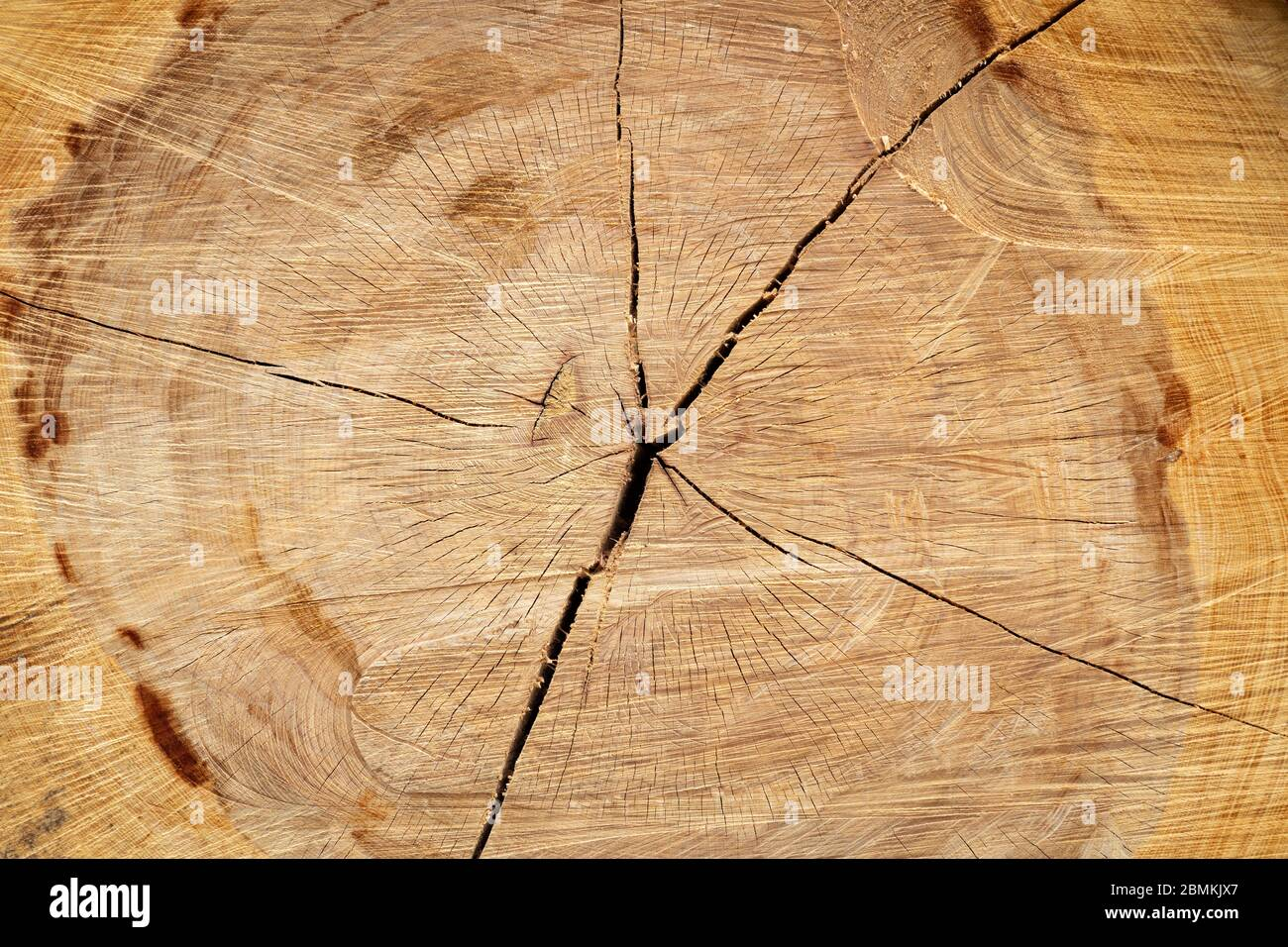 Stump of a big old tree felled - section of the trunk with annual rings Stock Photo
