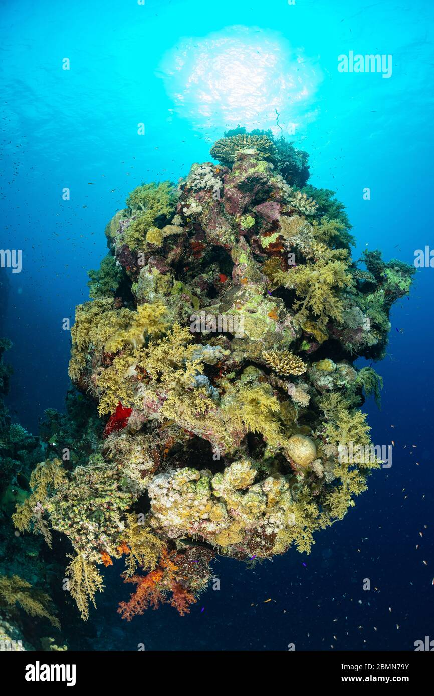Acropora coral uk betting philadelphia online sports betting