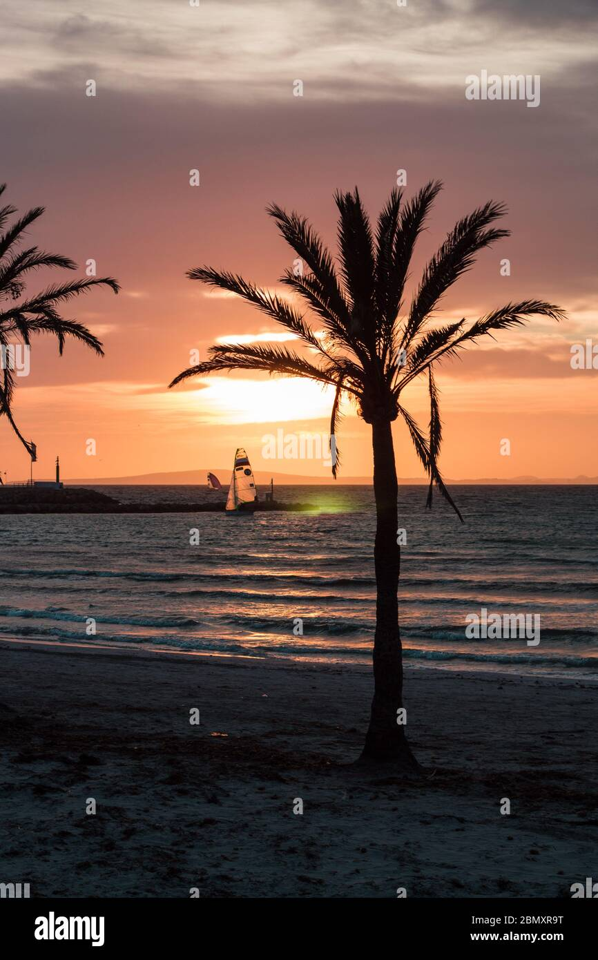Sunset in Palma de Mllorca, Palm with Surfer Stock Photo
