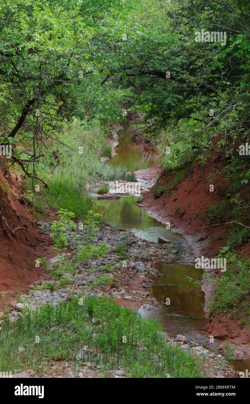 Little Buckhead Creek, at the Lexington Wildlife Management Area, Oklahoma Stock Photo