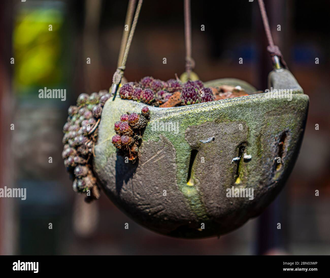Hanging flower pot made of a protection helmet in Jüchen, Germany Stock Photo