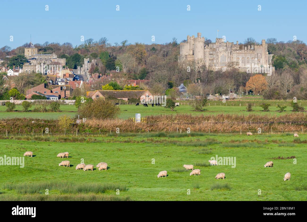 View of Arundel Castle with fields of sheep in the South Downs in Winter in West Sussex, England, UK. Arundel UK. Stock Photo