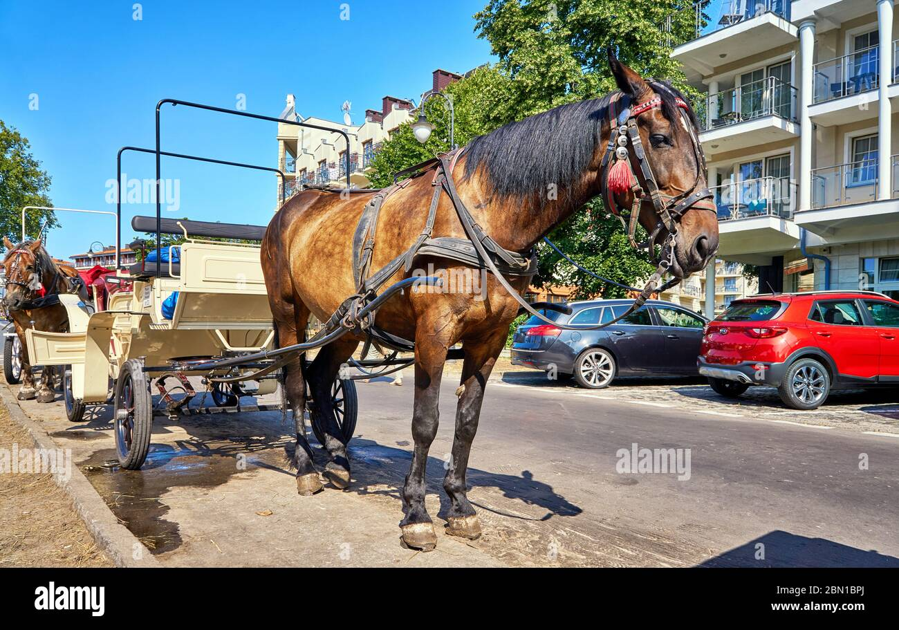 Promenade in Swinemünde with horses and carriages for tourists. Swinoujscie, Poland Stock Photo
