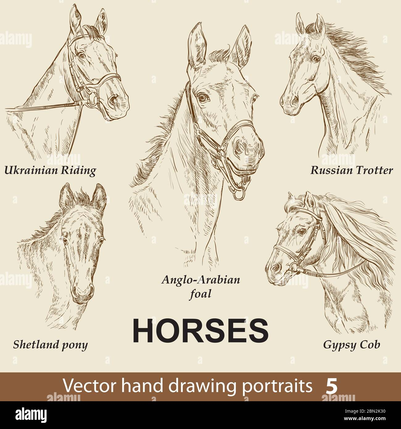 Hand Drawing Set Of Horses Breeds Elegance Horse Head Isolated On Beige Background Pencil Ink Hand Drawn Realistic Portrait Animal Collection Goo Stock Vector Image Art Alamy