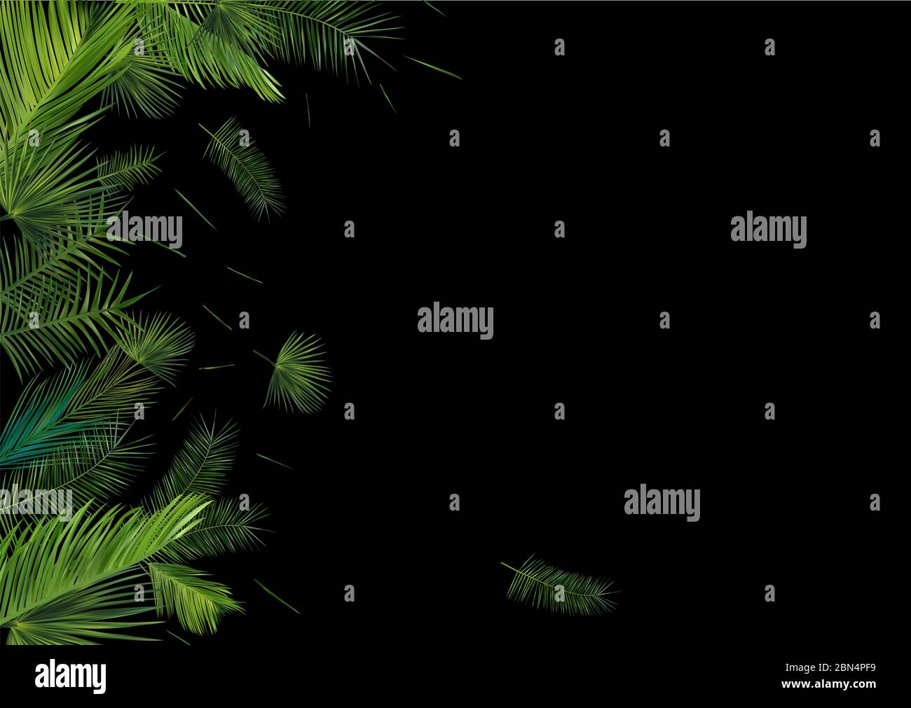 Collection Tropical Palm Leaf On Dark Background Beautiful Banner Exotic Botanical Design Different Palm Palm Leaves Realistic Leaves With Copy Space For Your Text 3d Illustration Stock Photo Alamy
