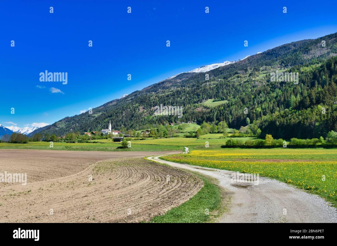 Iseltal, Osttirol, Frühling, Ainet, Schobergruppe, Dorf, Siedlung, Kirche, Weg, Feldweg, Feld, Acker, Landwirtschaft, Wiese, Blumenwiese, gelb, Löwenz Stock Photo
