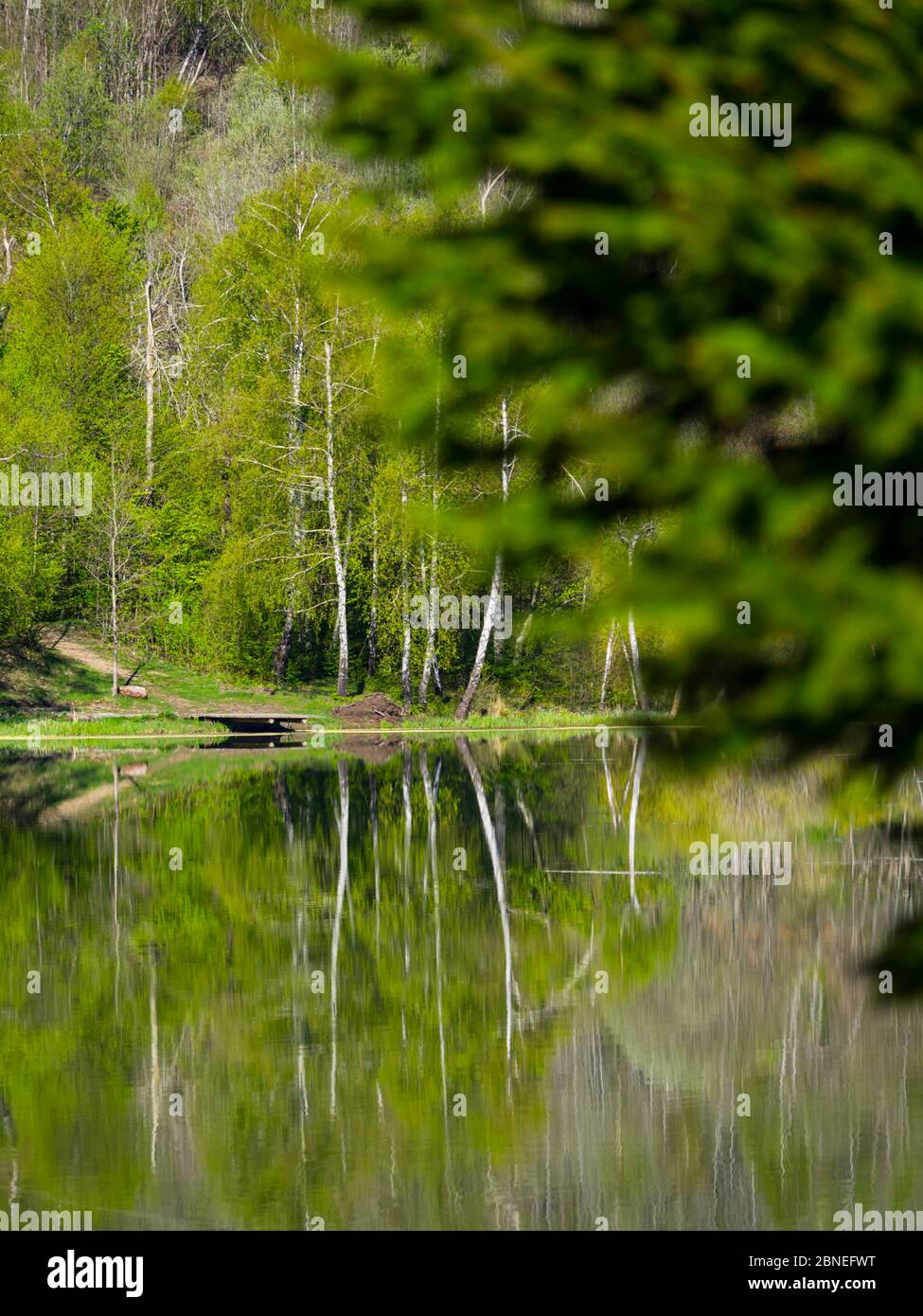 Green forest nature natural beauty focused on background trees coastline Stock Photo