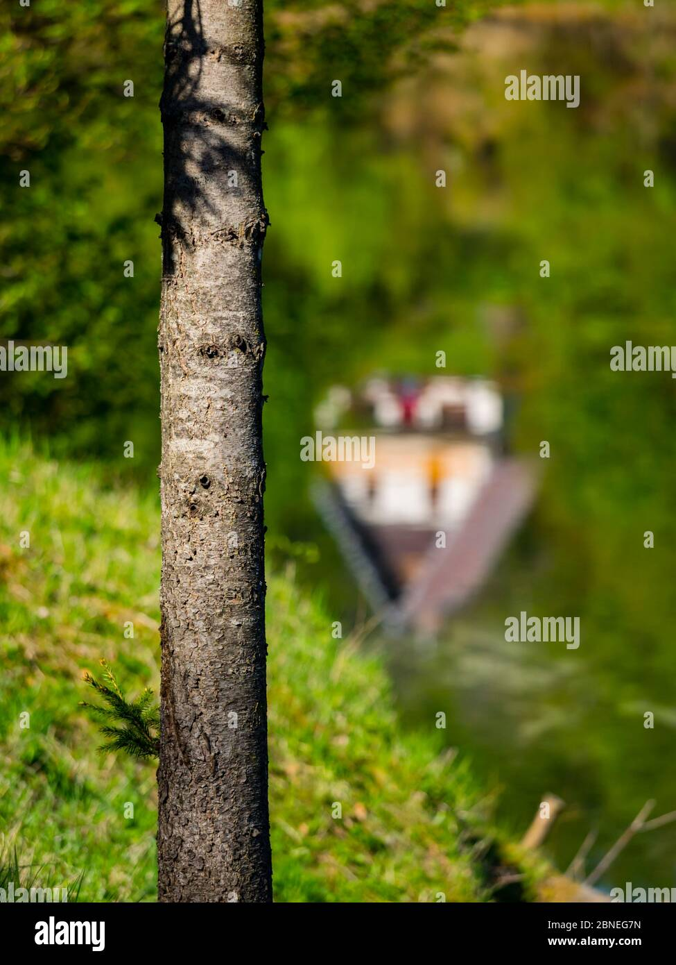 Green forest nature natural beauty isolated view on tree trunk traditional sharp roof house in blurry background blurred blur bokeh Stock Photo