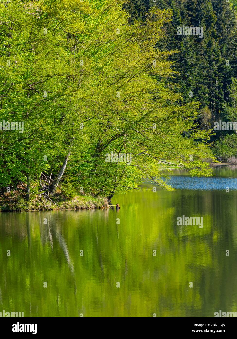 Green forest nature natural beauty isolated isolation focus on branch branches Stock Photo