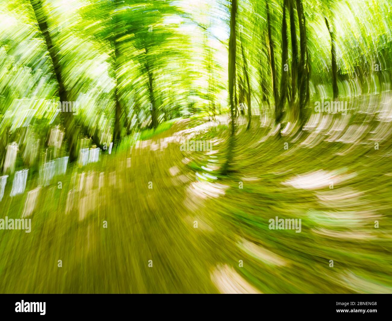 Green forest run intentionally blurry representing maximum utmost speed speedy fast movement trees and branches leaves Stock Photo