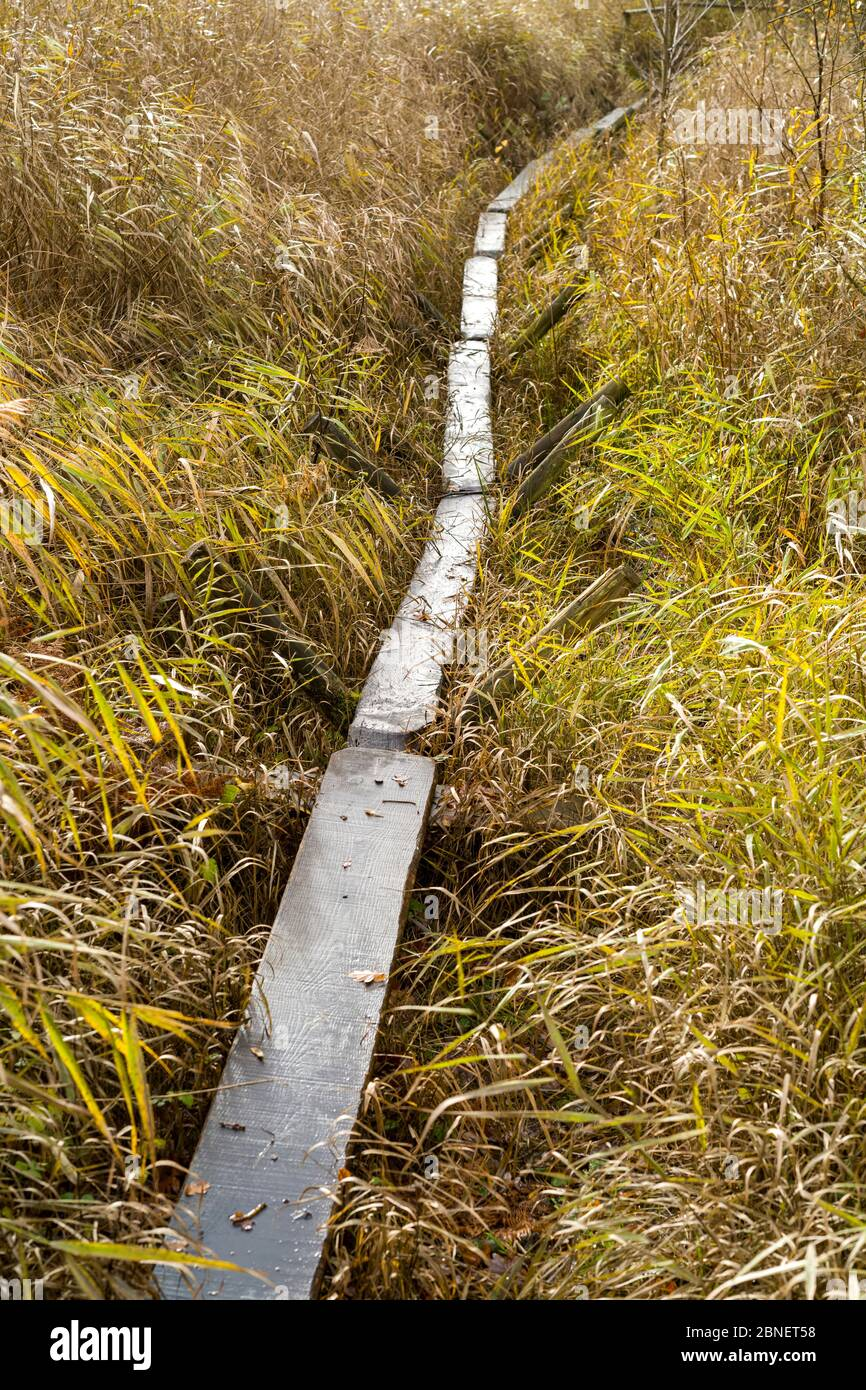 Replica of The Sweet Track - ancient trackway constructed in Neolithic times crossing Avalon Marshes reed swamp with poles driven into peat, Somerset, Stock Photo