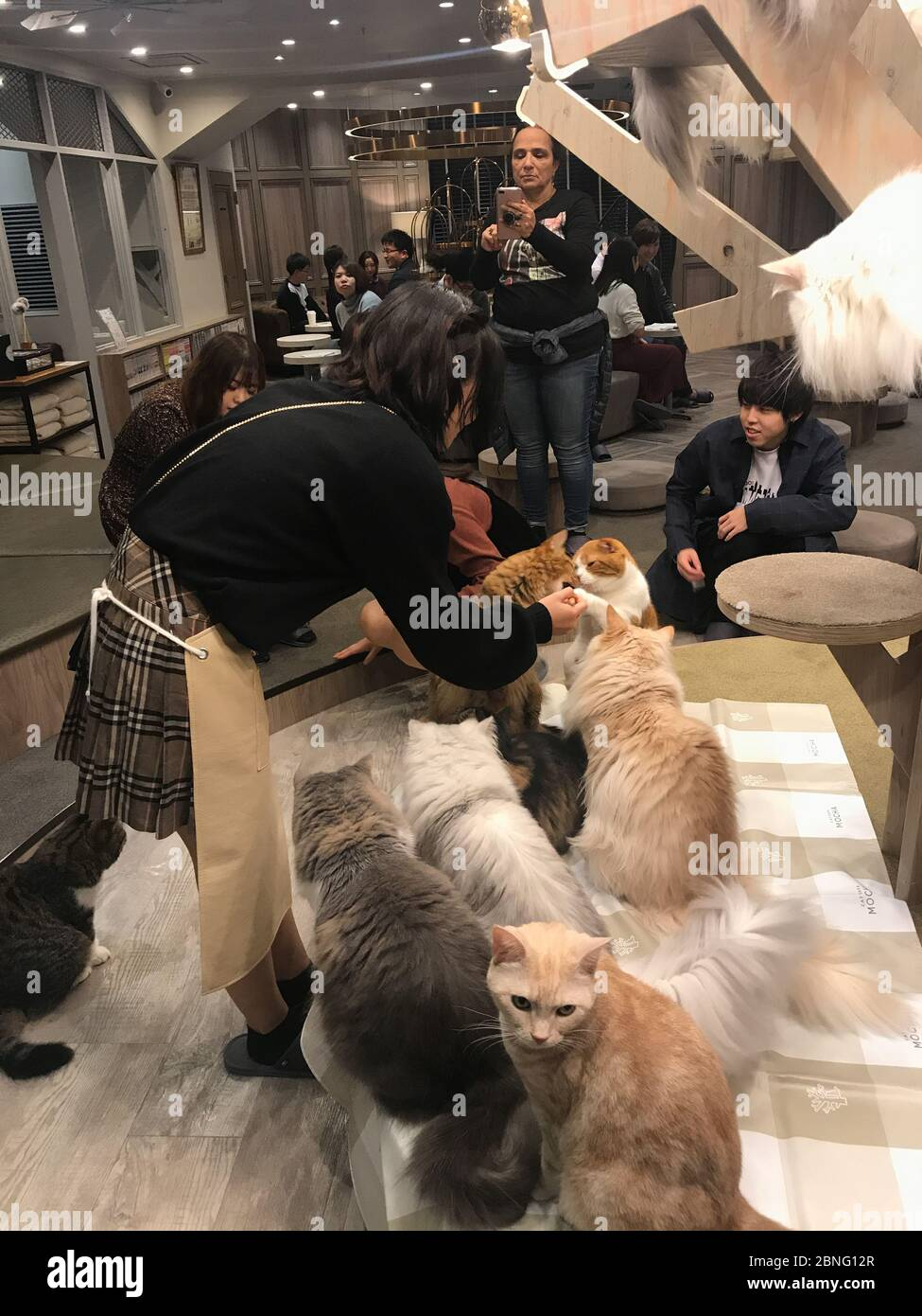 People Petting And Photographing Cats At The Cat Cafe Mocha In Shibuya Tokyo Stock Photo Alamy