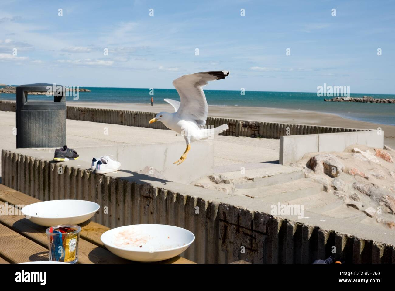 a seagull about to land on a wall near a table with empty plates at a beach side restaurant in southern france Stock Photo