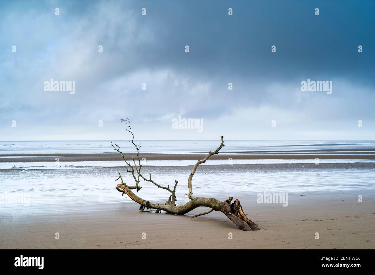 Driftwood - graphic image of dead branch washed up by the sea of the Bristol Channel onto sandy beach at Burnham-on-Sea, Somerset, UK Stock Photo