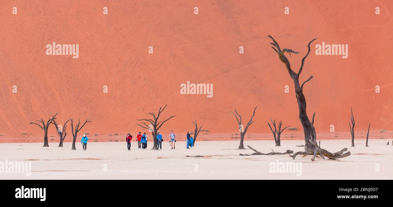 Tourists walking among ancient dead Camelthorn tree (Vachellia erioloba) in Deadvlei, Sossusvlei Salt Pan, Namib Naukluft National Park, Namibia Stock Photo