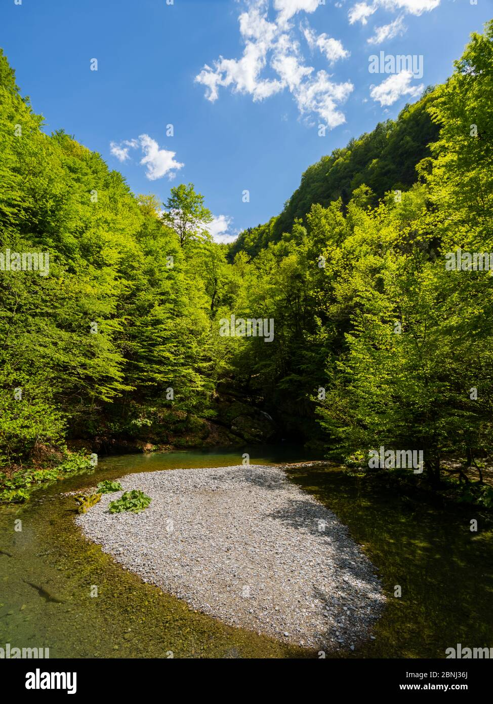 Zeleni vir near Skrad in Croatia Europe Green forest nature natural beauty small lake almost dried Stock Photo