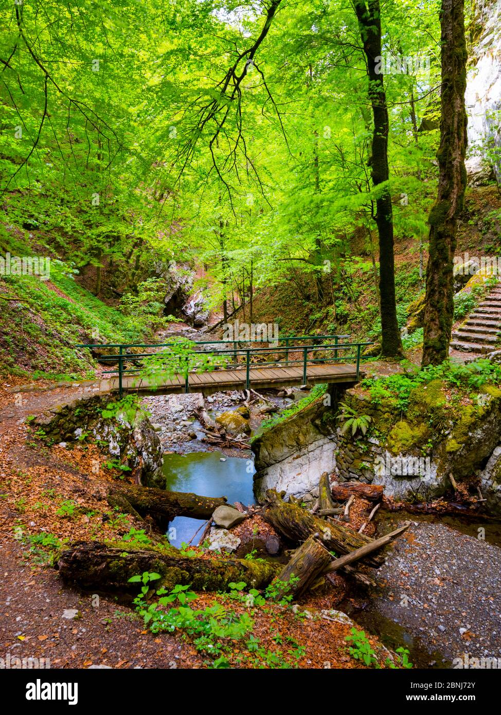 Zeleni vir near Skrad in Croatia Europe Green forest nature natural beauty footpath footbridge wooden bridge stunning Spring Green nature color Stock Photo