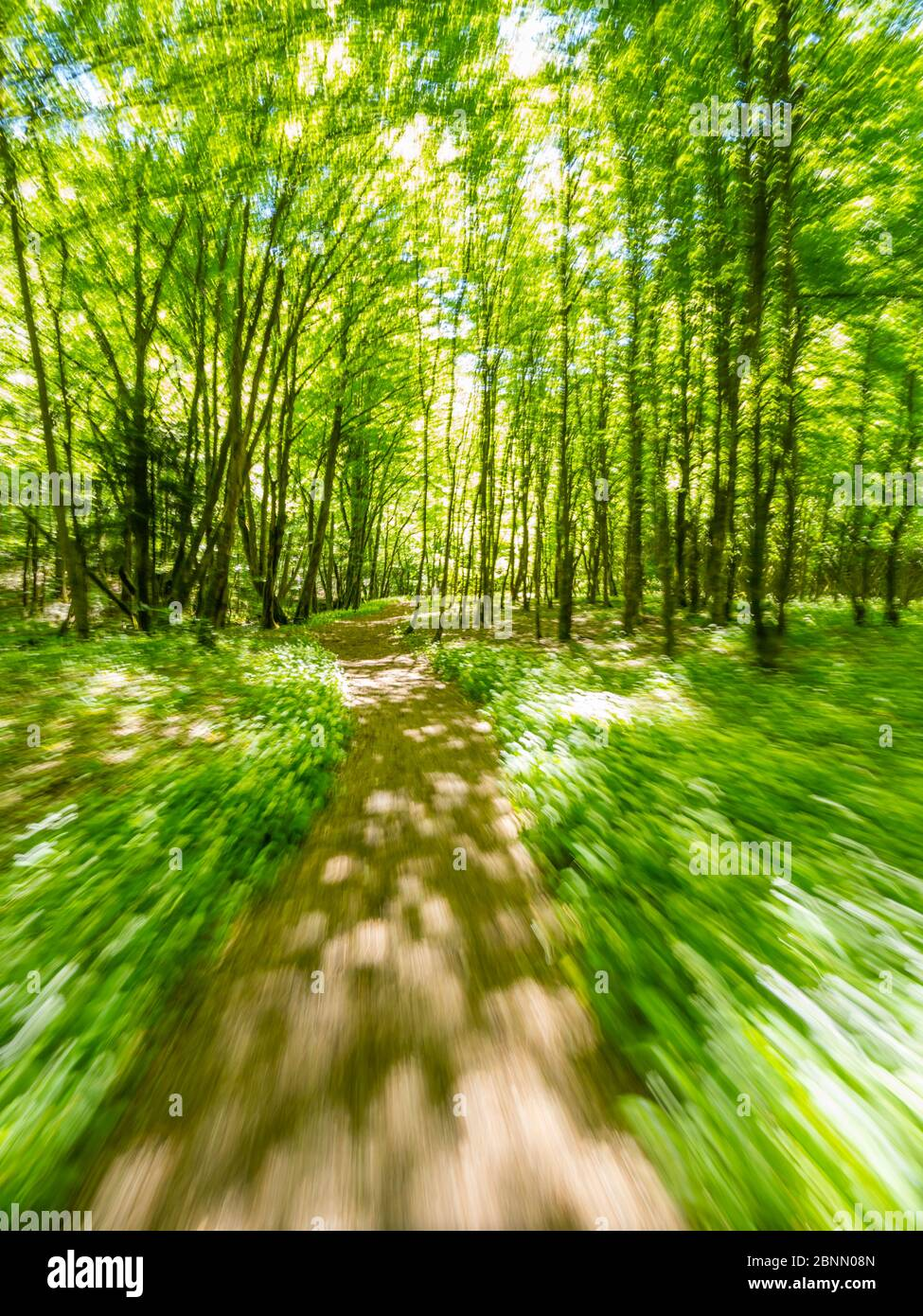 Stunning Spring Green nature color in forest while running simulated sprinter run intentionally blurry trail foottrail Zeleni vir Skrad Croatia Europe Stock Photo