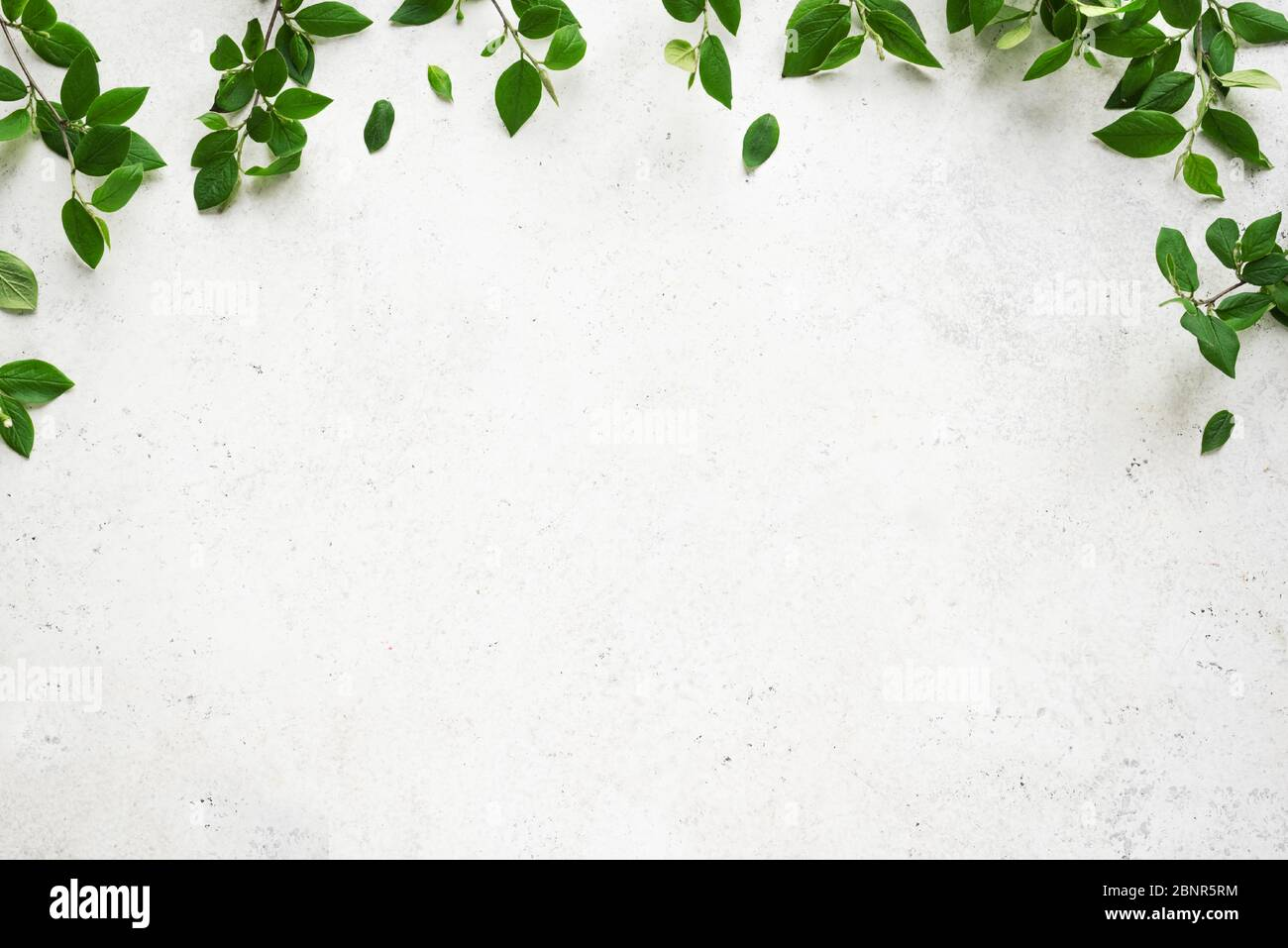 White background with green leaves, top view, copy space. Spring twigs with leaves, frame, flat lay. Eco lifestyle, spring or summer concept, minimal Stock Photo