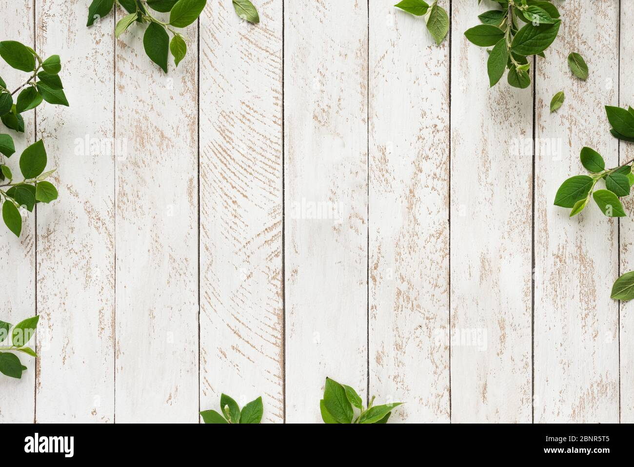 Old white wooden background with green leaves, top view, copy space. Spring twigs on shabby background, frame, flat lay. Stock Photo